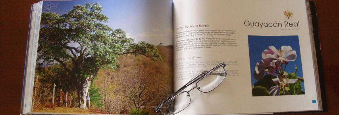 libro-arboles-magicos